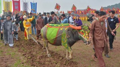 Tich Dien ploughing festival to bring a good farming year