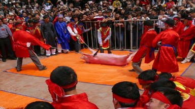"""We are disappointed in the pig-chopping ritual"": Asia Animals Foundation"