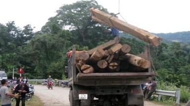 Forest rangers also smuggle wood