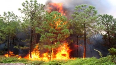 Forest fire risk puts Ba Ria-Vung Tau on high alert