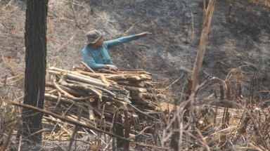 Quang Nam's people sets protective forest on fire to grow acacia