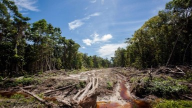 Asia-Pacific countries failing to stop forest loss, UN warns