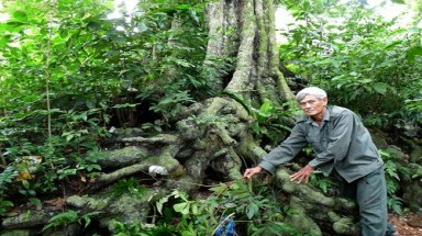 "Community of Vietnam""s oldest trees recognized as national heritage"