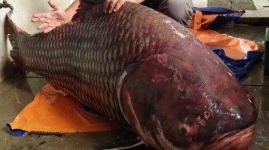 Cambodian sells a giant barb to Saigon restaurant
