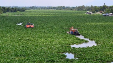 Water hyacinth blocks barges in polluted Tay Ninh river