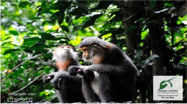 Rare monkey found deep in the forests of Vietnam's Central Highlands