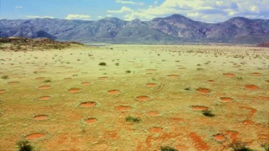 Africa's Weird Fairy Circles are Termite-Built Water Traps