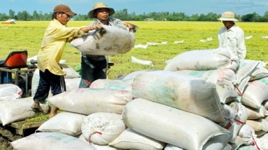 Dropping export prices pose challenge