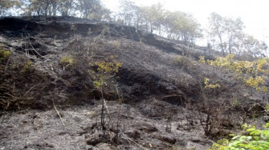 Ministry issues strong forest fire alert