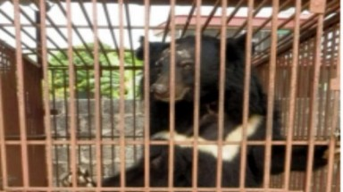 May deadline set for transfer of captive bears