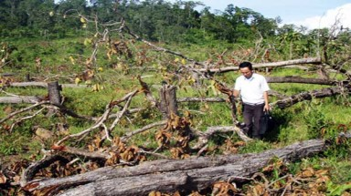 Central Highland region suffering from deforestation