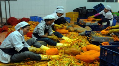 Agriculture export earnings take tumble