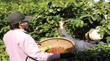 Vietnam wins the coffee battle by using laws