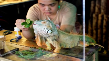The reptile café in Hanoi