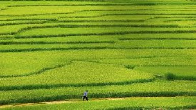 PM okays $22mil. budget to preserve rice fields