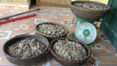 50kg of old coins unearthed in Ha Nam