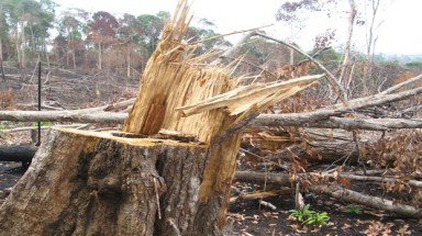 Watershed forest in Dac Nong destroyed