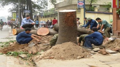 Lack of details led to tree rallies in Hanoi: inspectors