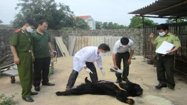 Four more bears die in Quang Ninh