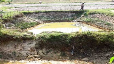 Delta drought, seawater ruin 6,000ha of rice