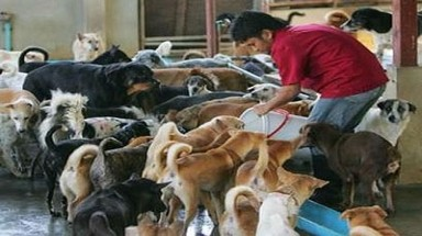Vietnam is one of the key dog meat markets in Southeast Asia