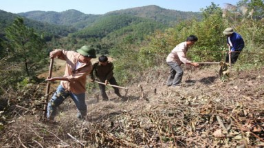 Incentives key to forest protection