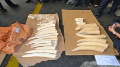 Another big ivory haul smuggled into Vietnam