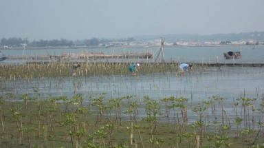 WWF and Microsoft help local people in Thua Thien Hue adapt to climate change impacts