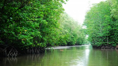 Ca Mau enlarges coastal protective forest areas