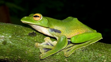 New species discoveries in the Greater Mekong