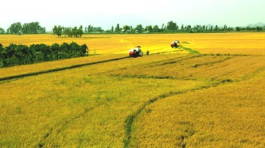Viet Nam to create prominent rice brand