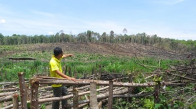 Central Highlands' forests slowly dying