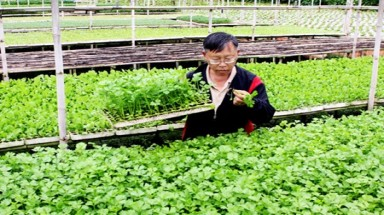 Lam Dong farmers reap the rewards from organic crops