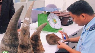 "There is ""protection"" for rhino horn smuggling into Vietnam"