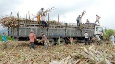 Sugarcane yields sweeten but quality still lags