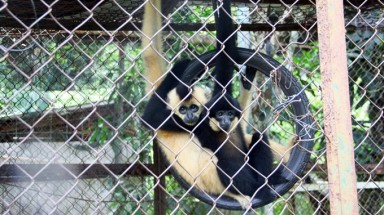 "Binh Duong: Wild animals rescued from officials"" farms"