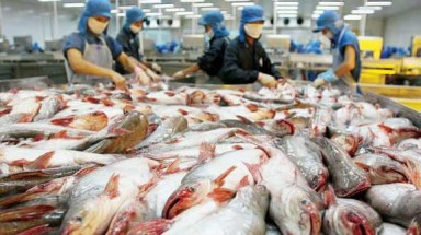 US adjusts import tariff on Vietnamese Pangasius fish