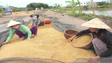 Vietnam to miss benefits of global rice market recovery