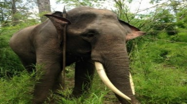 Tusks of elephant in Dak Lak national park stolen
