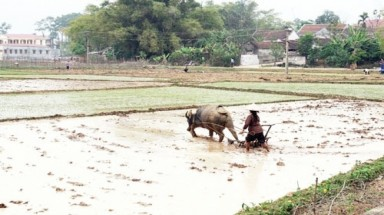 Farmers give up farming, pay back land