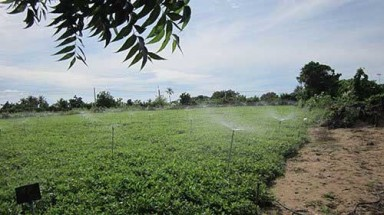 Solar-powered watering system applied in Ninh Thuan