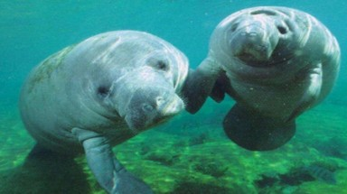 US consulate to host Dugong protection fair