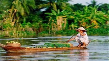 Mekong Delta hit by invasive shrub