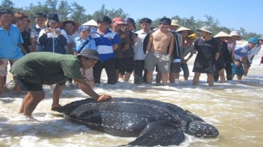 Endangered rare turtle released into wild