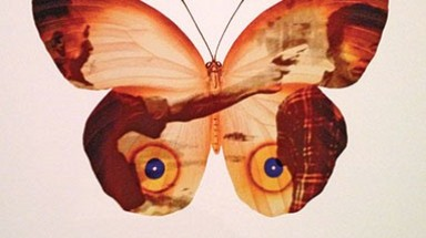 Vietnam's butterflies adorned with war images displayed at Danish museum