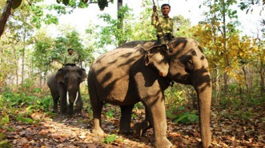 Elephants at risk in Dak Lak