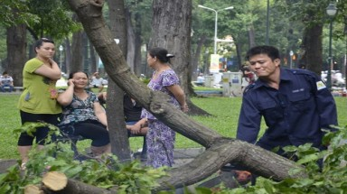In Vietnam hub, street trees become nightmare during rainy season