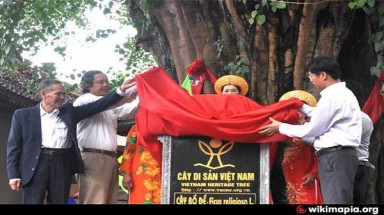 Vietnam to have more heritage trees