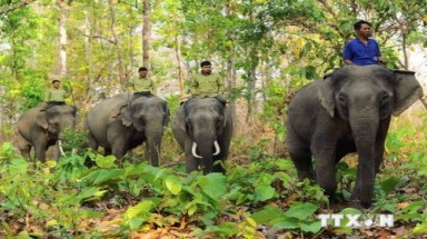 Ministry takes emergency measures to protect wild Asian elephants