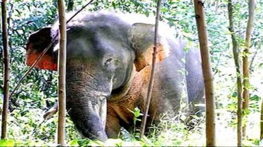 Dong Nai: Wild elephants need urgent protection